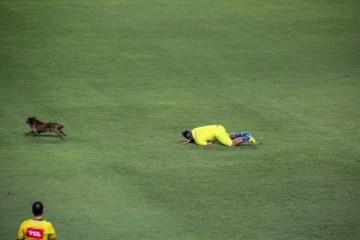 Cachorro invade o campo, rouba a cena e deixa até gandula no chão em jogo do Campeonato Brasileiro; VEJA VÍDEO