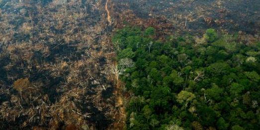 Amazônia - PESQUISA DATAFOLHA: para 75% dos brasileiros, a Amazônia está em risco por causa dos incêndios