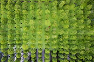 Pesquisa sugere que árvores estão aprendendo a se adaptar à mudança climática