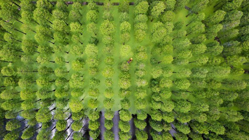 floresta lge 795x447 - Pesquisa sugere que árvores estão aprendendo a se adaptar à mudança climática