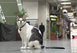 Gato 'ganha na justiça' direito a circular por galeria de Copacabana