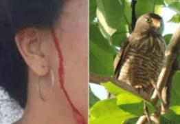 NINHO DE GAVIÃO: Vídeo mostra ataque de ave que 'persegue' moradora há um mês – ASSISTA