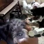85 - Polícia fecha fábrica clandestina que fazia linguiça com carne de cães e gatos
