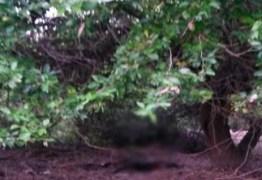 Corpo de homem é encontrado embaixo de árvore, em Santa Rita, na Paraíba