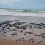 a2bc20119fd9543795d0b0e45a59b020 1 - Bahia decreta estado de emergência por manchas de óleo no litoral