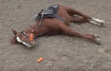 Cavalo se finge de morto toda vez que alguém tenta montá-lo