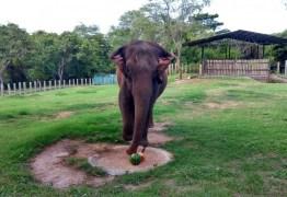 Após seis anos em João Pessoa elefanta Lady deve ser transferida para o Mato Grosso na próxima segunda-feira