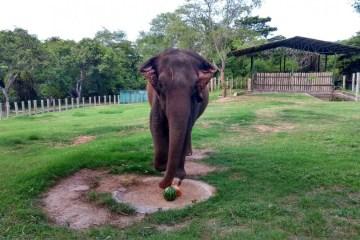 42eea249 dc4f 4c57 81af 939502ba1318 - Após seis anos em João Pessoa elefanta Lady deve ser transferida para o Mato Grosso na próxima segunda-feira