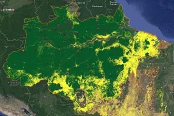 Capturar 41 - Desmatamento na Amazônia bate recorde e cresce 29,5% em 12 meses