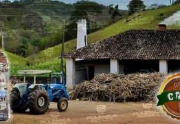 ROTA DA CANA: Cachaça Ipueira e o processo de produção artesanal que é uma verdadeira obra de arte
