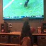 af0d22ac3864a4d091495973abcb398f - Cães enlouquecem ao ver gato invadindo campo de futebol - VEJA VÍDEO