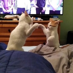 bbi6n9g1tbuch0gyfpzoevsyk - Gatos são obrigados a 'fazer as pazes' e dona registra momento
