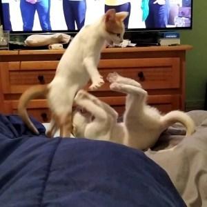 dxz5dkz4elgg0s4hosoyy6drn - Gatos são obrigados a 'fazer as pazes' e dona registra momento
