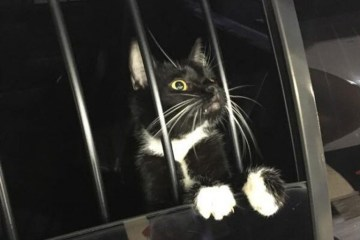 Invadiu uma casa: Polícia prende gato por suspeita de furto