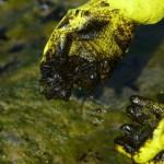 naom 5db9c6f93f524 - Manchas de óleo aparecem no Delta do Parnaíba, litoral do Piauí