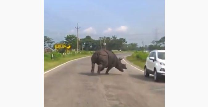 rinocerante donde - Rinoceronte invade rodovia e deixa motoristas em pânico - VEJA VÍDEO