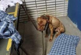 Justiça decreta prisão de 22 envolvidos na rinha de cães