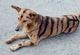 Agricultor transforma cão em tigre para afugentar macacos de plantação