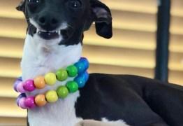 Cadela que está sempre 'sorrindo' viraliza nas redes sociais