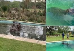 """Hipopótamo de 3 toneladas """"invade"""" piscina residencial em Botsuana"""