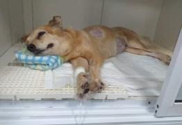 Após morte do dono por câncer, cadela está com a mesma doença, em João Pessoa