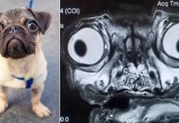 Ressonância magnética de pug viraliza nas redes sociais