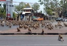 Sem turistas, bandos de macacos famintos vagam por ruas na Tailândia