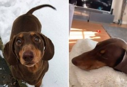 Cão torce o rabo de tanto abaná-lo animado com os donos em quarentena pelo coronavírus
