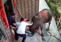 Aterrorizante: Búfalo escapa e ataca mãe e bebê na China