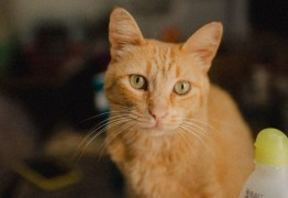 Cresce procura por adoção de cães e gatos, durante pandemia