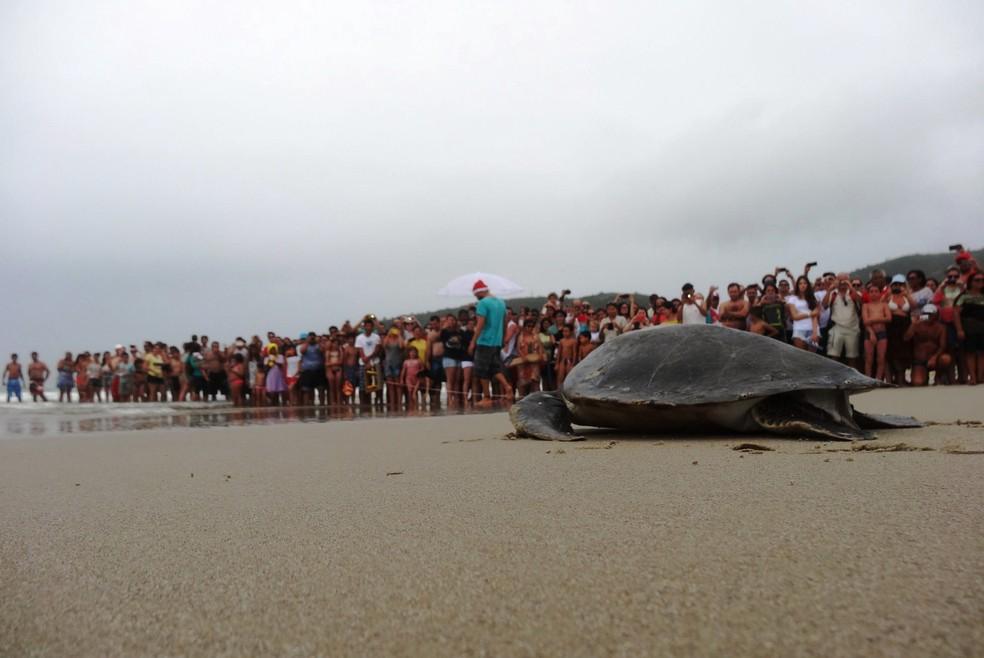 tartaruga - Governo faz mudanças no ICMBio e extingue bases do Projeto Tamar