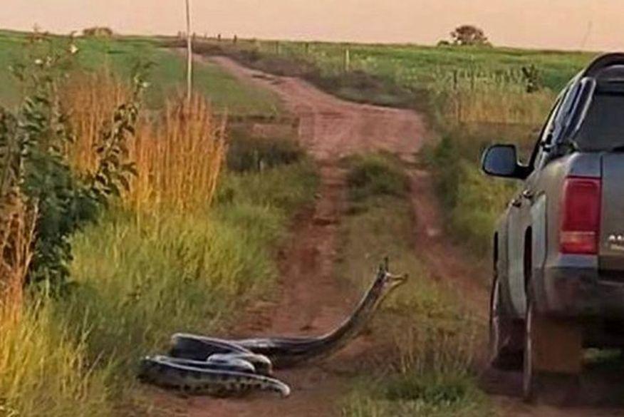 45ogds190b184qqz4d2lxje9g - Cobra de sete metros ataca família dentro de carro; VEJA VÍDEO