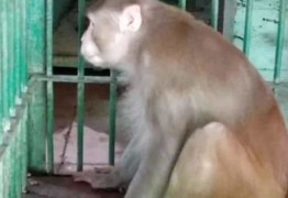 VIOLENTO: Macaco embriagado fica preso após matar uma pessoa e atacar outras 250