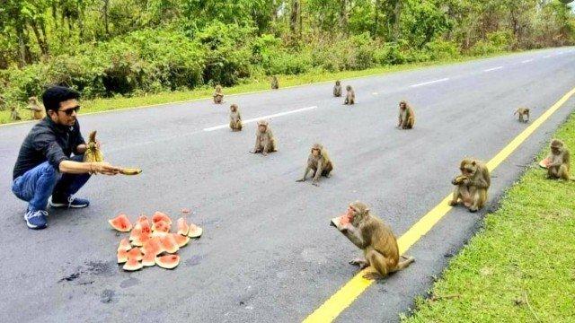 xblog monkeys.jpg.pagespeed.ic .34XXPYmKd6 - Macacos surpreendem por 'distanciamento social' na Índia
