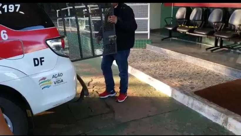 20200722094010865074o - Polícia do DF prende amigo de estudante de veterinária picado por cobra naja