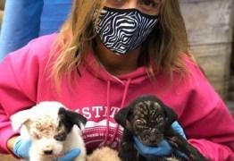 Luisa Mell critica Claudia Ohana por devolver cães adotados