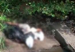 Membros humanos encontrados em rio estavam em um hospital filantrópico da capital; entenda