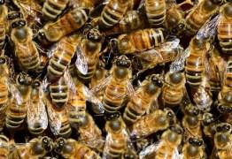 Idoso de 91 anos atacado por abelhas em Campina Grande faleceu nesta quarta-feira