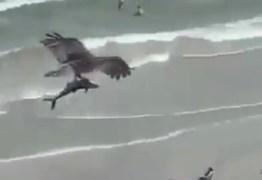 Vídeo mostra águia sobrevoando praia com tubarão em suas garras e intriga internautas