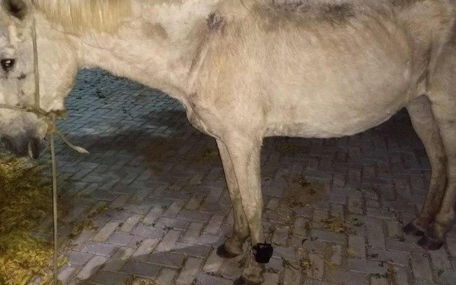 czb8acrfj565tada3v2uotovi - PRISÃO ANIMAL: Cavalo é encontrado usando tornozeleira eletrônica