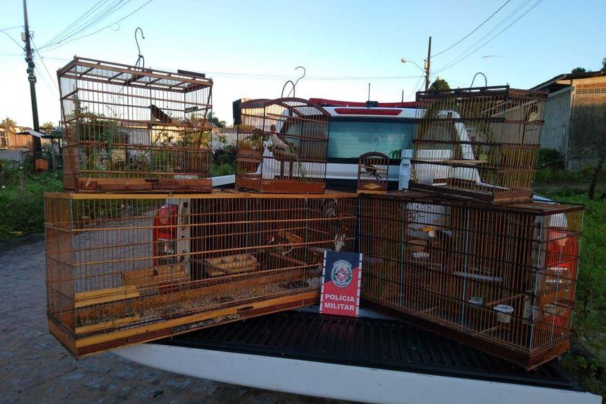 Polícia prende traficante de aves silvestres em João Pessoa neste sábado