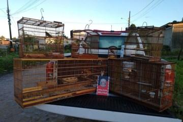 policia prende traficante de aves em joao pessoa - Polícia prende traficante de aves silvestres em João Pessoa neste sábado