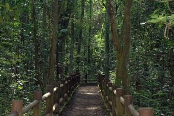 Bolsonaro autoriza privatização dos parques nacionais de Brasília e Santa Catarina