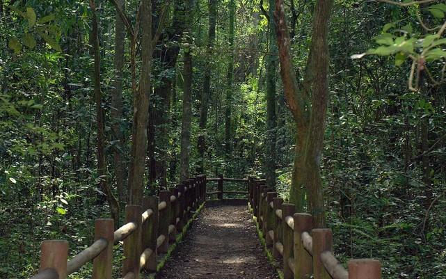 Capturary 1 - Bolsonaro autoriza privatização dos parques nacionais de Brasília e Santa Catarina