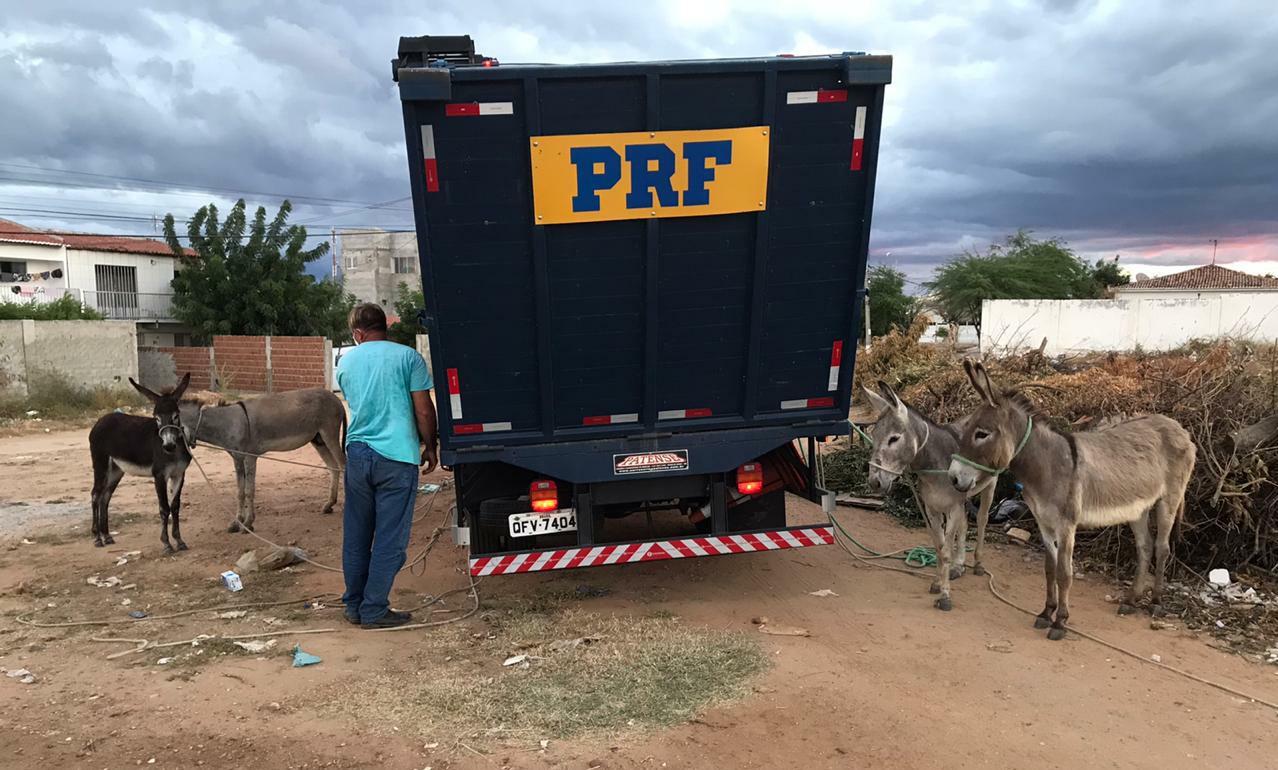 WhatsApp Image 2020 08 21 at 11.37.34 - PRF na Paraíba realiza a Operação 'Pista não é Pasto'