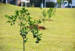 TJPB julga inconstitucional lei que prevê o plantio de árvores por empresas concessionárias de veículos