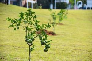 arvores 300x200 - TJPB julga inconstitucional lei que prevê o plantio de árvores por empresas concessionárias de veículos