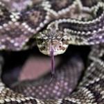 cobra - Adolescente é 'perseguido' por serpente e leva oito picadas em um mês