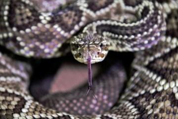 Adolescente é 'perseguido' por serpente e leva oito picadas em um mês