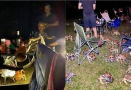 Gangue de caranguejos gigantes e famintos invade churrasco e aterroriza família